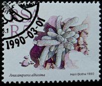 South Africa, Anacampseros albissima, 1990
