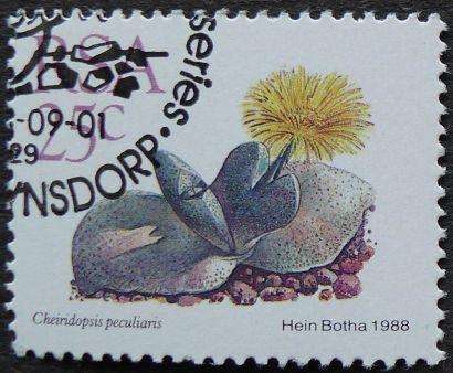 South Africa, Cheiridopsis peculiaris, 1988