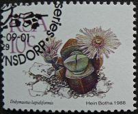 South Africa, Didymaeotus lapidiformis, 1988