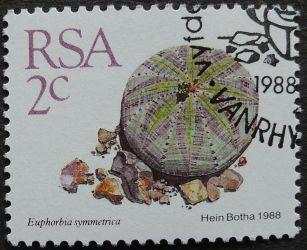 South Africa, Euphorbia symmetrica, 1988