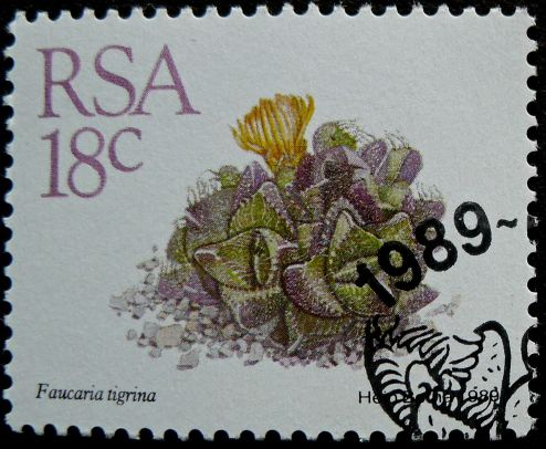 South Africa, Faucaria tigrina, 1988