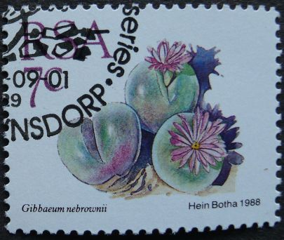 South Africa, Gibbaeum nebrownii, 1988