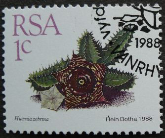 South Africa, Huernia zebrina, 1988