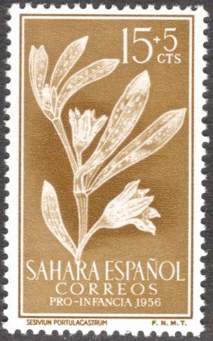 Spanish Sahara, flora, Sesuvium portulacastrum, 1956