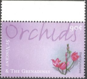 St Vincent & the Grenadines, orchids, Bletia purpurea