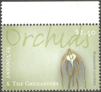 St Vincent & Grenadines, orchids, Brassavola cucullata