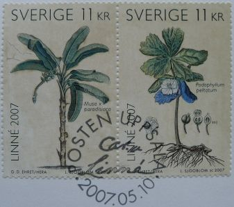 Sweden, Podophyllum peltatum, Musa x paradisiaca, 2007