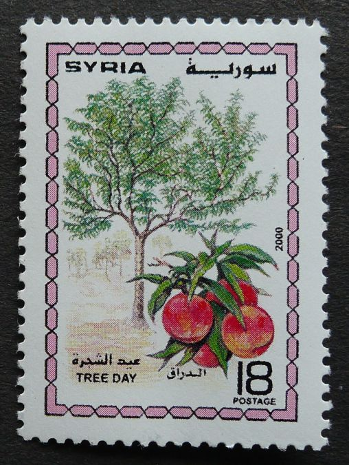 Syria, Tree Day, 2000