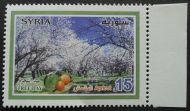 Syria, Tree Day, Apricot, 2009