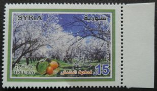Syria, Tree Day, Apricot, 2009