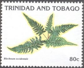 Trinidad & Tobago - ferns, Blechnum occidentale