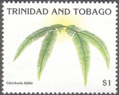 Trinidad & Tobago - ferns, Gleichenia bifida