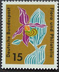 West Germany, Cypripedium. Probably Cypripedium calceolus