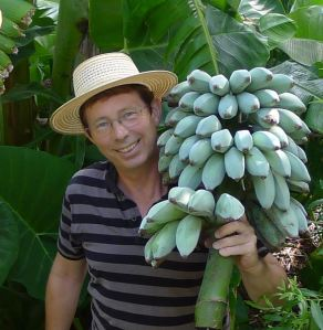 Real life is never portrayed on the glossy front cover of a gardening magazine. With versatile Java Blue bananas.