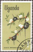 Uganda - Acacia drepanolobium, Whistling thorn