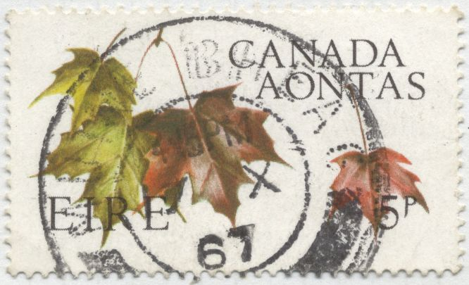 Canada - sugar maple, Acer saccharum