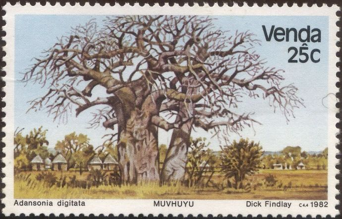 Venda - Adansonia digitata, African Baobab