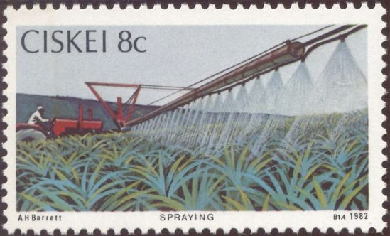Ciskei - Ananas comosus - spraying pineapples