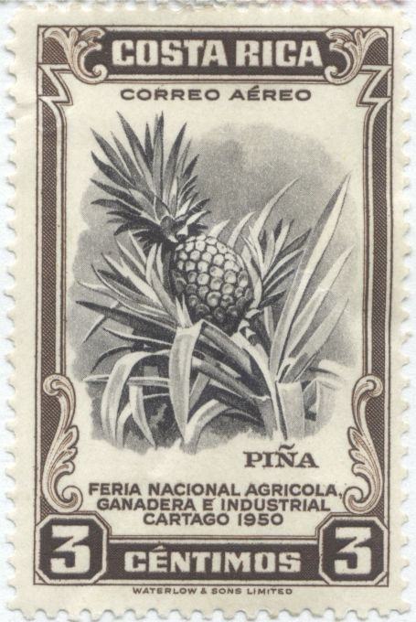 Costa Rica - Pineapple, Ananas comosus
