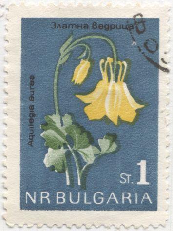 Bulgaria - Aquilegia aurea