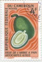 Cameroon - Artocarpus altilis