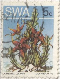 South West Africa - Caralluma lugardii