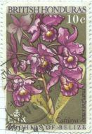 Honduras - Cattleya bowringiana