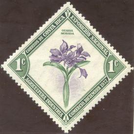 Columbia - Guarianthe skinneri, (syn. Cattleya skinneri), Guaria morada, the Columbian national flower
