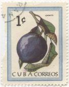 Cuba - Chrysophyllum cainito, cainito