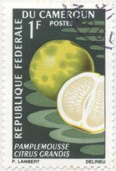 Gabon - Citrus paradisi, grapefruit