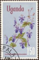 Uganda, Clerodendrum myricoides 'Ugandense'