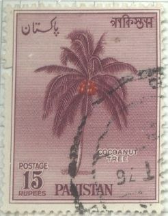 Pakistan, Cocos nucifera, coconut