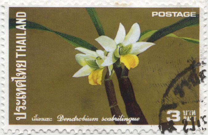 Thailand - Dendrobium scabrilingue