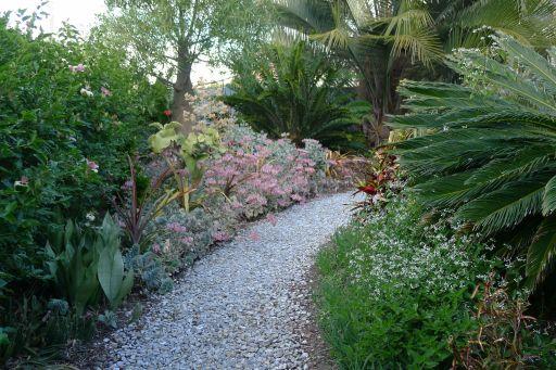 Front Garden, August 2011