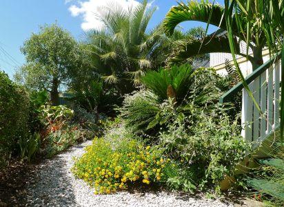 front garden, November 2011