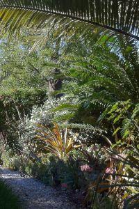 Front garden, winter 2011