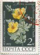 Russia - Glaucium flavum, Yellow Horned poppy