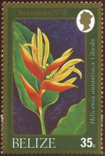 Belize - Heliconia aurantiaca, Heliconia