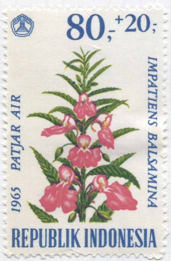 Indonesia - Impatiens balsamina
