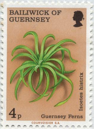Guernsey - Isoetes histrix