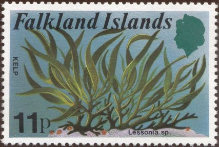 Falkland Islands - Lessonia species, Kelp