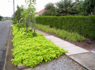 nature strip and front garden 2010