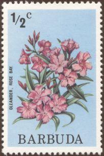 Barbuda - Nerium oleander