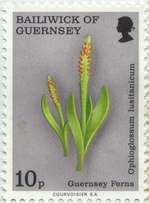 Guernsey - Ophioglossum lusitanicum