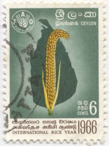 Sri Lanka - Oryza sativa, rice