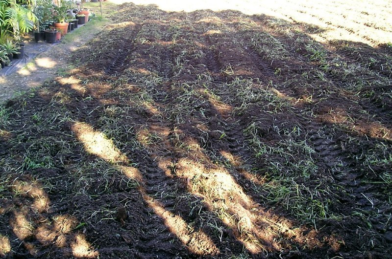 Green Manure Hoed In Late July '04