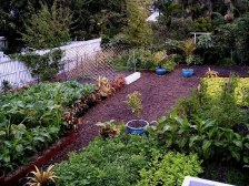 Raised beds filled with organically rich soil and traffic areas covered with a fibrous mulch also help prevent runoff.