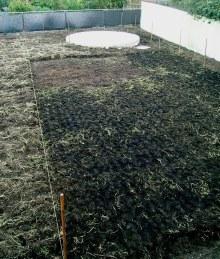 Future Lawn Aug '04