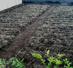 Future Vegetable Plots
