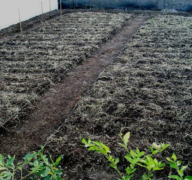 Future Vegetable Plots